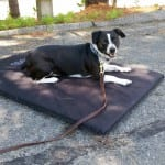 Dog-Laying-Down-Learning-Basic-Commands