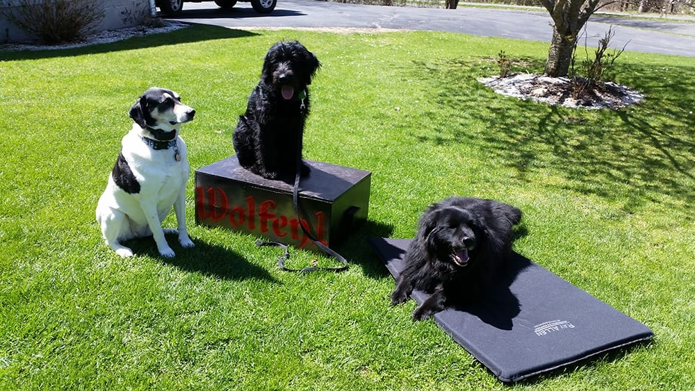 Three-Dogs-Sitting-Down-Learning-Basic-Commands