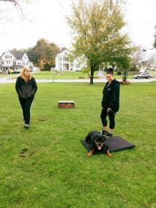 Two-Dog-Trainers-Dog-Basic-Commands