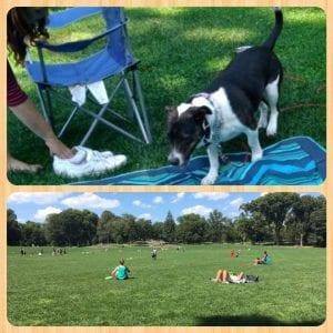 Dog-Owner-Park