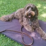 Dog-Training-Basic-Commands-Laying-Down