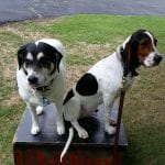 Two-Dogs-Box-Dog-Training-Commands