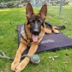 German-Shepherd-Basic-Commands