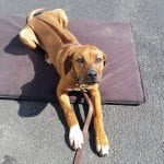 Puppy-Laying-Down-Basic-Commands-Training