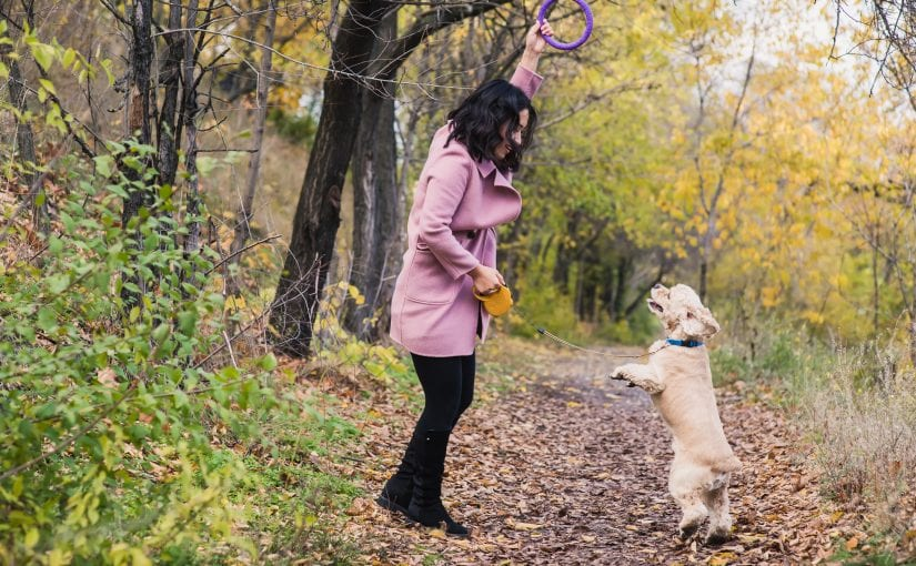 4 Autumn Safety Tips To Keep Your Dog Happy and Healthy