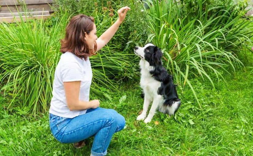 When Should You Start Dog Training?